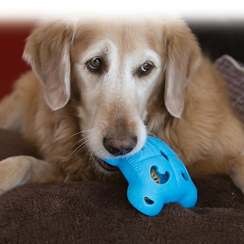 Kong Quest Foragers Flower Dog Toy Skrowkni